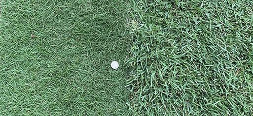 types of zoysia grass